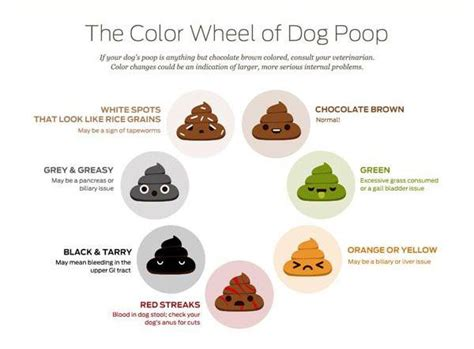 color of diarrhea best 25 pools ideas on doggie pool big