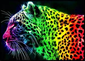 colorful tiger colorful rainbow tiger graphic design picture