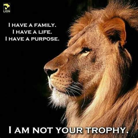 lion biography in english cecil the lion killer walter palmer to return to work