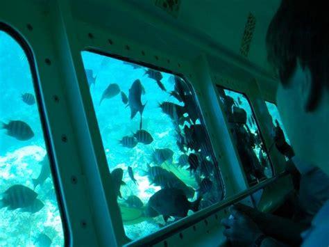 glass bottom boat tour grand bahama island 25 best freeport bahamas grand bahamas island images on
