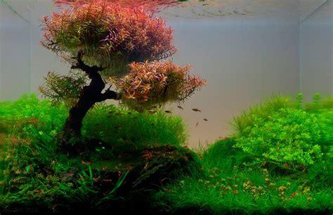 amazing underwater aquascape landscaping pictures