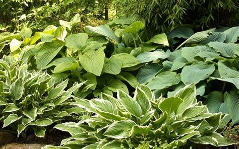 Hardy Patio Plants by 14 Cold Hardy Tropical Plants To Create A Tropical Garden