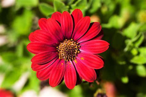 Imagenes De Flores Ornamentales | image gallery plantas ornamentales