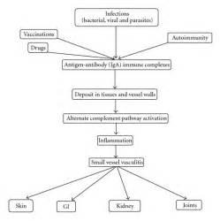 schematic diagram of meningitis pathophysiology
