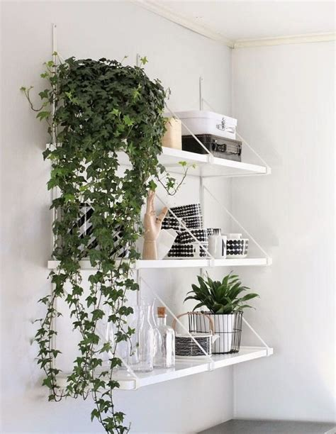 best indoor hanging plants 33 creative ways to include indoor plants in your home