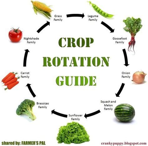 Vegetable Garden Crop Rotation Crop Rotation Tips For Better Gardening Results Exles