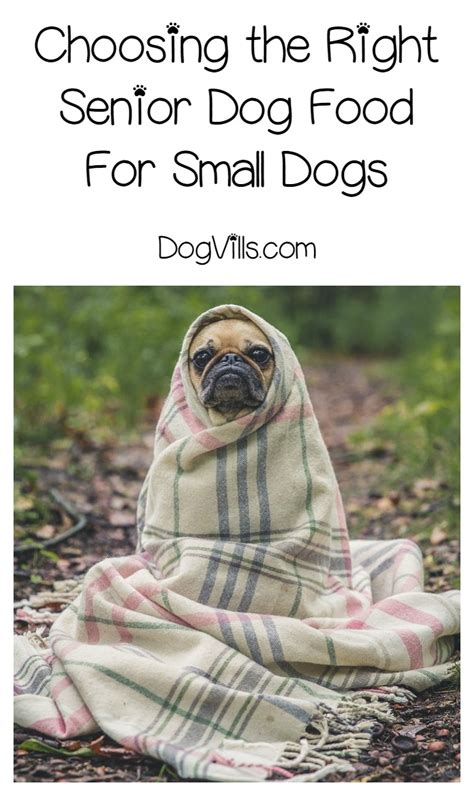 best senior food small breeds small breed senior food what to look for dogvills