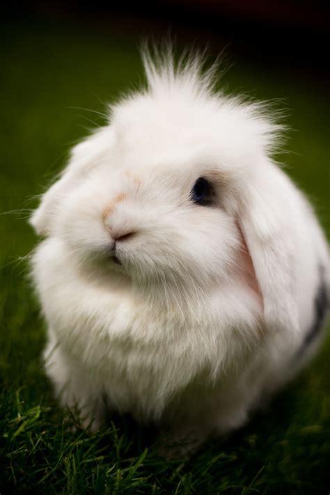 rabbit bunny bunny bunny rabbits photo 30657097 fanpop