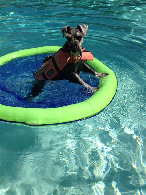 pool rafts for dogs 43 best dogs floating on a float in the pool images on animals pools