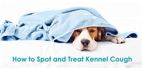 how to spot and treat kennel cough allivet pet care