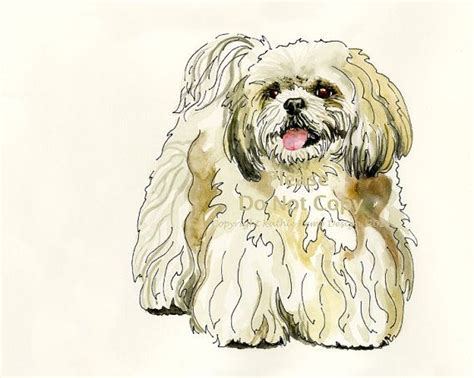 shih tzu drawing shih tzu drawing pet illustration pen and ink watercolor gift idea wall decor pet