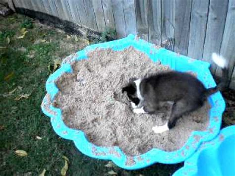 how to stop a dog messing in the house how to stop your dog from digging holes in the garden youtube