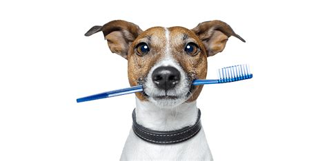 do dogs clean mouths toothbrush archives on it parks