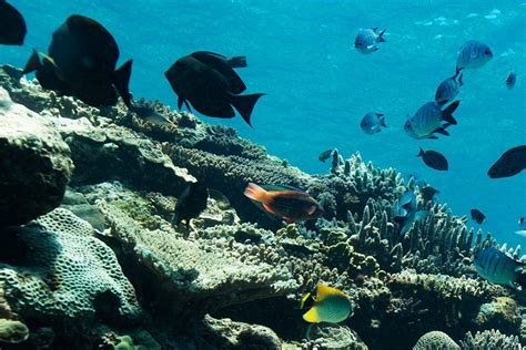 great barrier reef dive great barrier reef luxury snorkel and dive cruise from