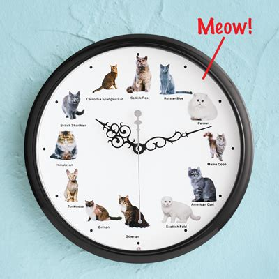 cat breed clock  sound  collections