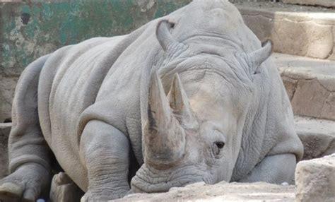 Imágenes de Animales en via de extinción y especies ...