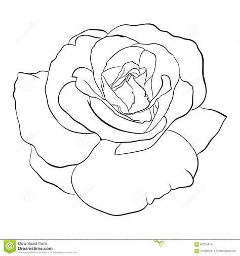 beautiful monochrome black and white rose stock vector