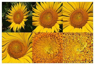 fiori recisi nomi immagini fiori con nomi stratfordseattle
