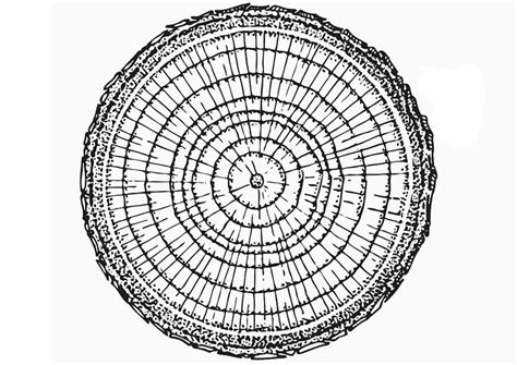 tree ring coloring page coloring page growth rings img 12896
