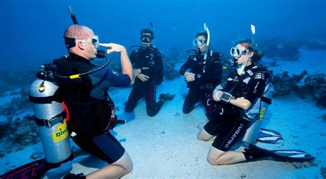 how to dive home page pro dive magnetic island