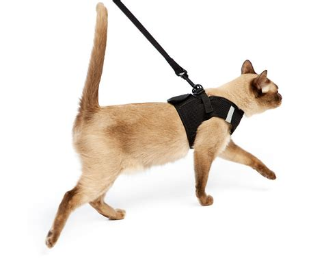 harness leash cat harness leash