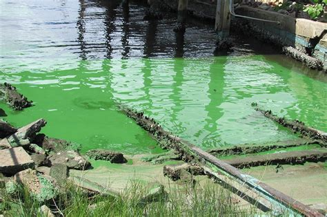 are water toxic toxic algae outbreaks in florida earthjustice