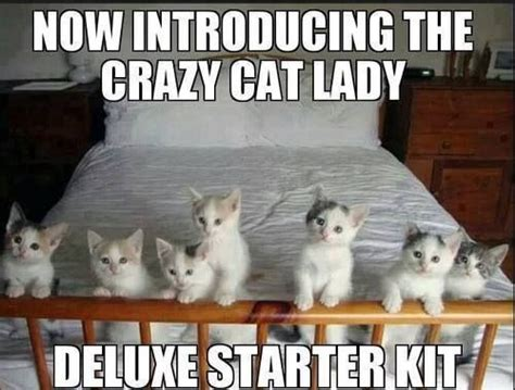 Dog Lady Meme - 345 best images about crazy cat ladies on pinterest i