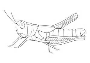grasshopper coloring page free printable coloring pages