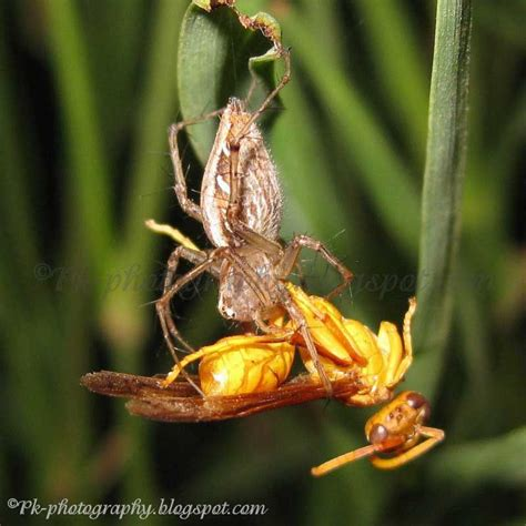 do spiders eat bed bugs do spiders eat bed bugs do spiders eat bed bugs what do