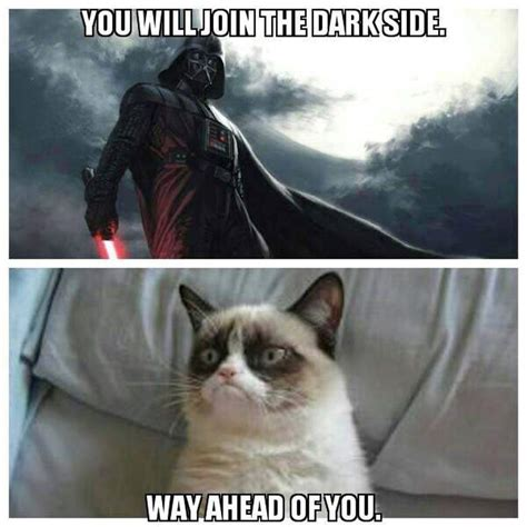 Star Wars Cat Meme - may the fourth be with you all the memes you need to see