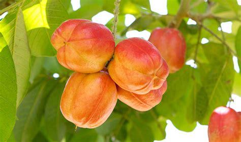 fruit d afrique 187 10 fruits exotiques dont vous n avez probablement jamais
