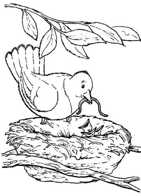preschool nature coloring pages backyard animals and nature coloring books free coloring