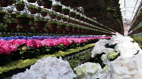 contact century home  garden greenhouses port perry