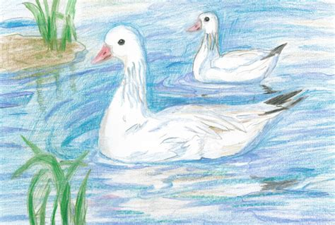 painting 9 year 2013 junior duck st contest billy frank jr nisqually