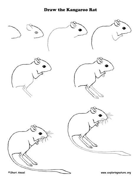 doodle draw kangaroo rat drawing lesson