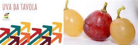 varieta uva da tavola uva da tavola 183 asso fruit italia 183 organizzazione di