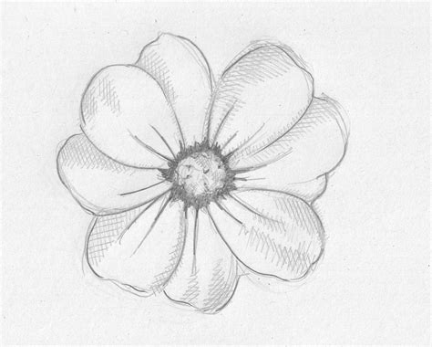 Drawing Flowers by Flower Drawings Related Keywords Suggestions Flower