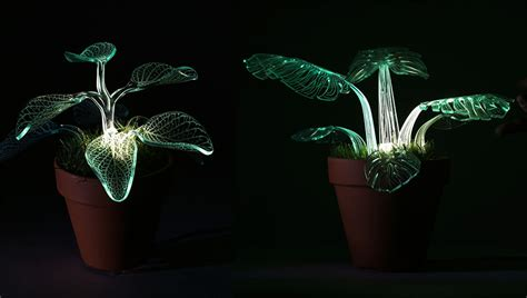 glow in the dark plants i make evergreen plants that glow in the dark bored panda