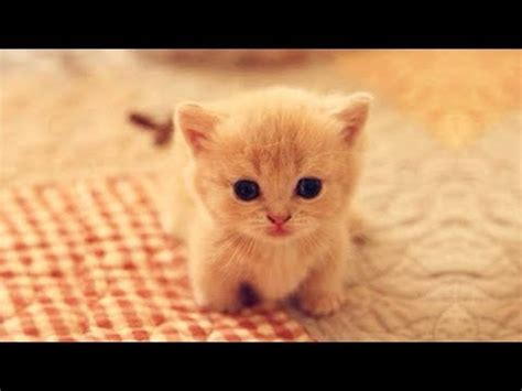 cuteness kittens  puppy cute cat  dogs compilation