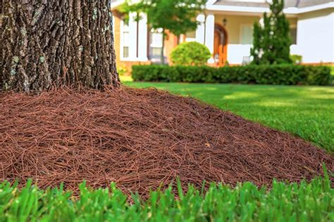 the benefits of garden mulch homesteading tips