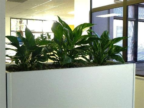 Living Decor Hire Plants Whangarei Open Office Plants Living Decor Indoor Plant Hire Specialist