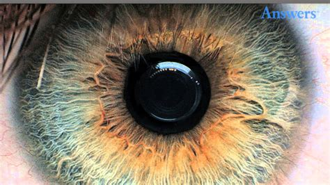 what does my eye color eye conditions you to see to believe