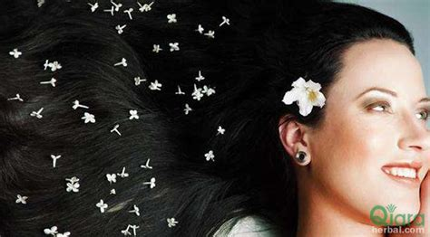 Catok Rambut Di Semarang perawatan rambut rontok di semarang qiara herbal perawatan rambut rontok dan rusak