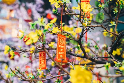 Tree Decor For Home by Vietnam During Tet Dominik Photography