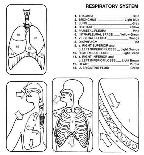 anatomy of speech coloring book the world s catalog of ideas