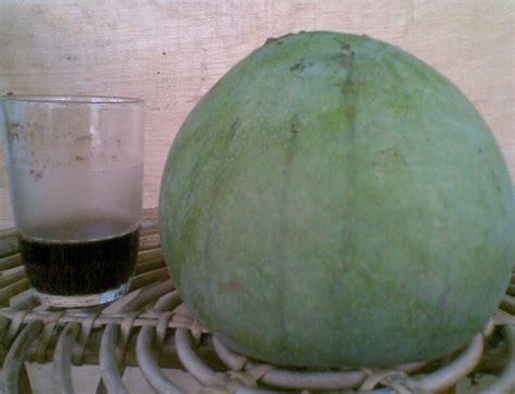 Bibit Mangga Kelapa 60cm tanaman mangga kelapa bibitbunga