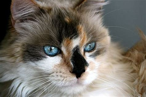 Stop Cat From Shedding by All Cats Shed But If Your Home Has Been Overrun With Cat Fur Veterinarian Dr Marty Becker Has