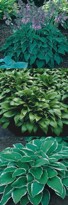 are hostas poisonous to dogs 1000 images about backyard ideas for my dogs on gravel patio pea gravel