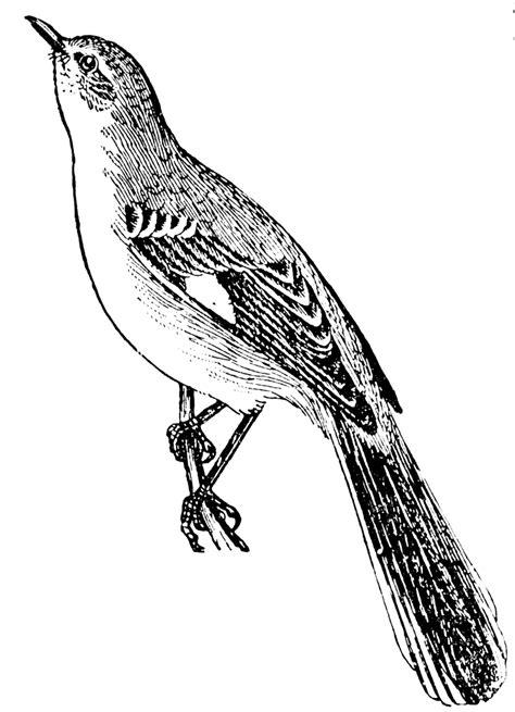 mockingbird clipart etc