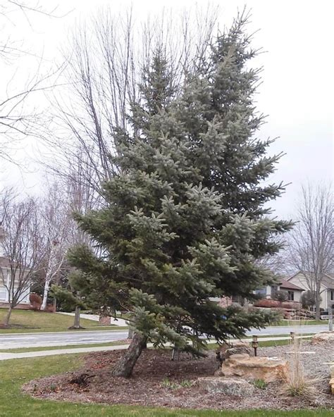 how to fix a leaning christmas tree how to fix a leaning tree